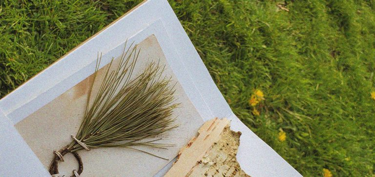 top right corner of the accordion book we can see a foraged pine image tied with natural strings. It site behind a botanically dyed paper against sunny grass